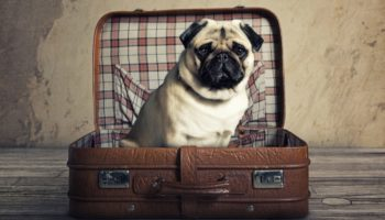 Tips On How To Travel With Dogs