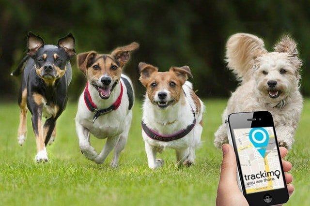 Trackimo Pet Tracker Review