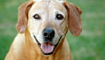 7-reasons-to-adopt-a-senior-dog