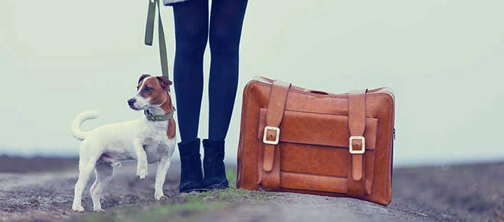 Traveling-With-Your-Dog-jpg