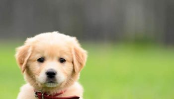 impossibly-cute-puppy-8 (1)