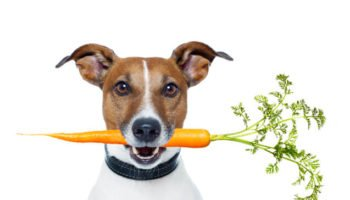 vegetables-for-dogs-main