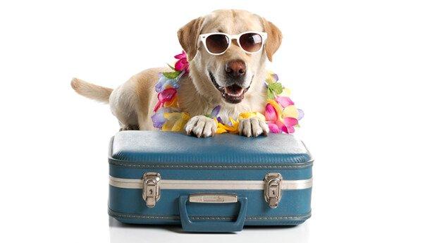 Dog-on-holidays