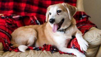 HappyTails_Riley-Sis_2016Oct05_0051