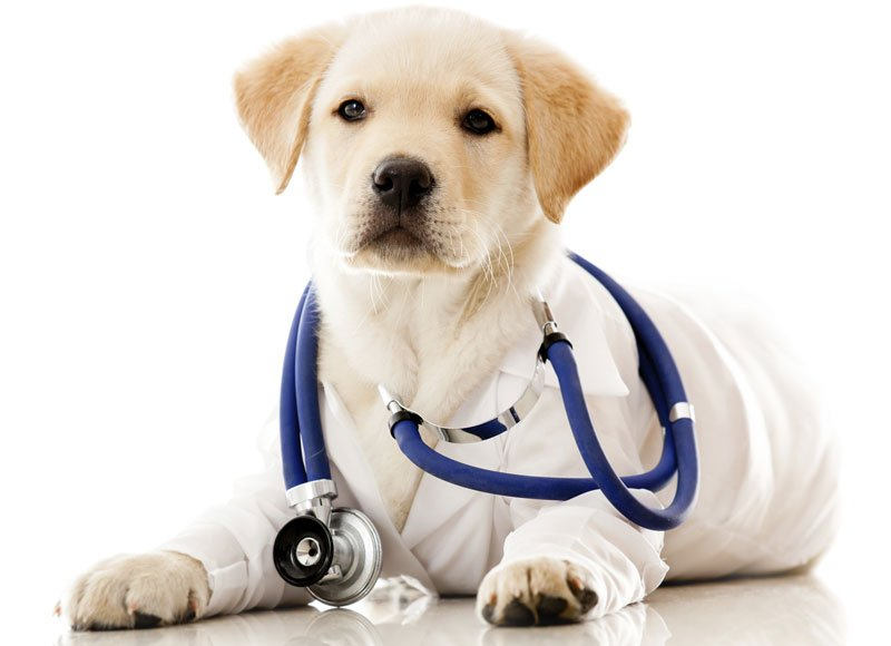 Training Hospital Therapy Dogs