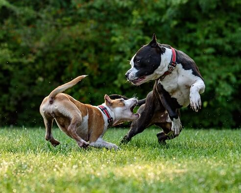 Pet Behavior 1