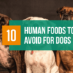 10 Human Foods To Avoid for Dogs